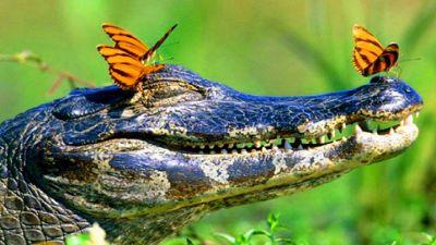 Невероятные-моменты-из-жизни-животных-WCM.jpg
