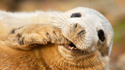 Остров-тюленей-WCM.jpg