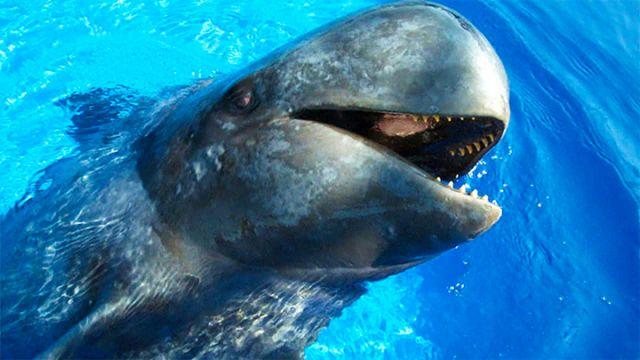 Удивительный-мир-китовой-стаи-WCM.jpg