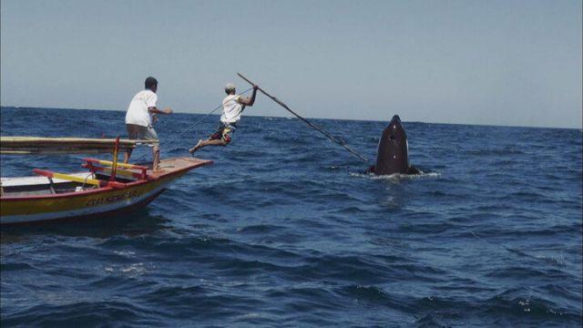 The-Whale.jpg