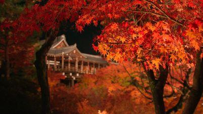 Tofukuji.jpg